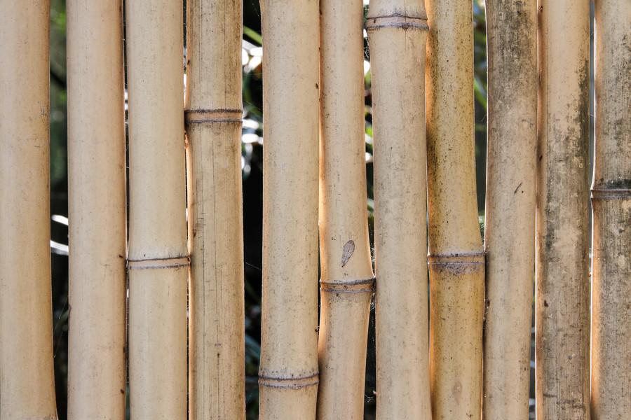 Bamboe staven, verweerd