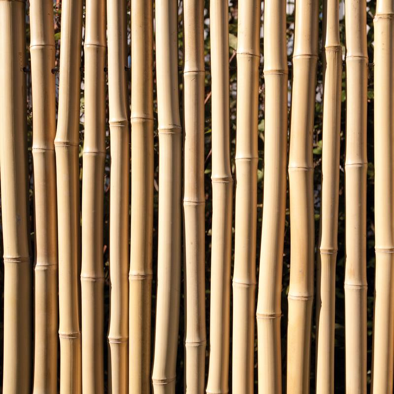 Bambus Detail